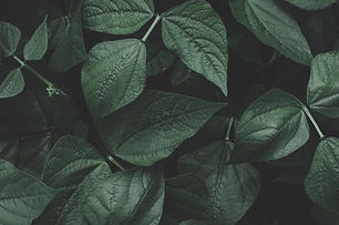 green-leaves-1418329.jpg