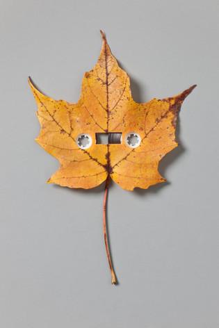 Sounds of Autumn