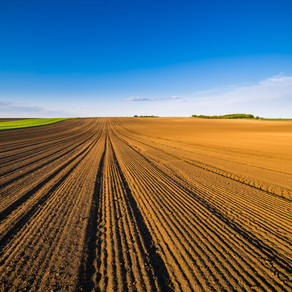 The Race To Future-Proof Food Production