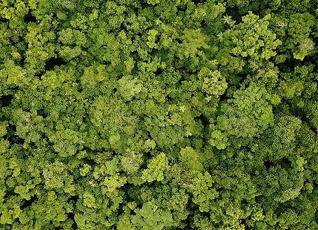 Forest-Mobile_edited.jpg