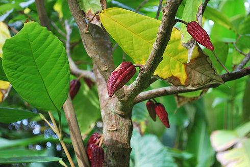 Tree Global Ghana Landscape Restoration Partnership