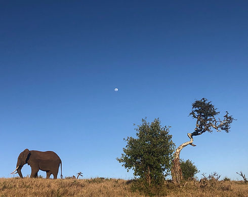 Lewa Wildlife Conservancy at the Ngare Ndare Forest Trust