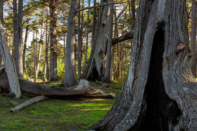 Parque - Monterey, CA, EUA