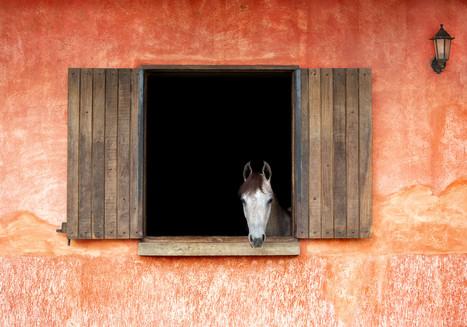 Equestres - Baias