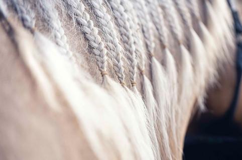 Equestres - Detalhes
