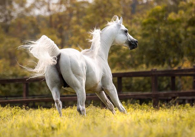 Equestres - Movimento
