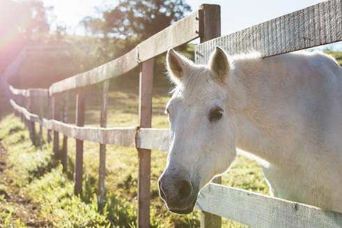 Equestres - Paisagem