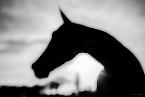 Equestres - Contra luz
