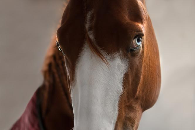Equestres - Olhar
