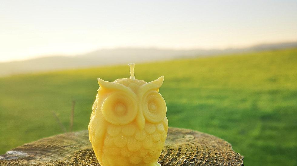 Novelty Owl