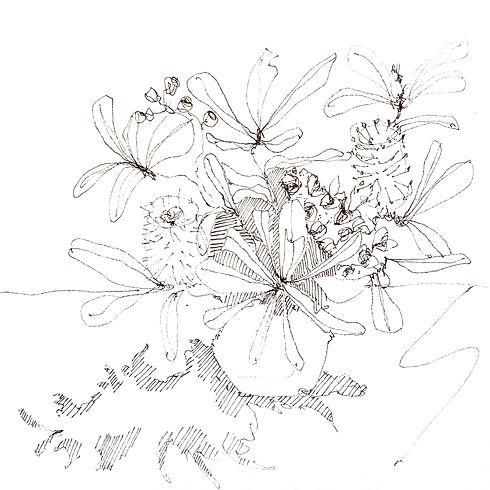 Banksias2 copy.jpg