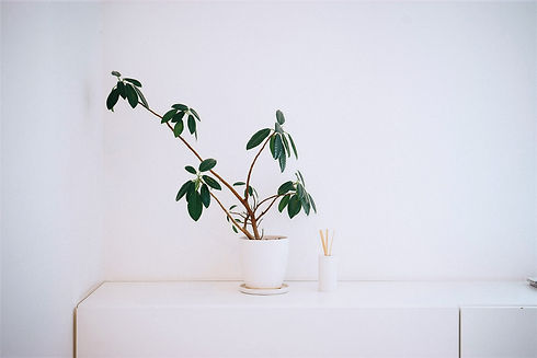 Plant%20in%20White%20Pot_edited.jpg