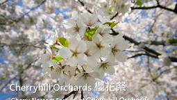 Cherryhill Orcahrds 櫻花祭