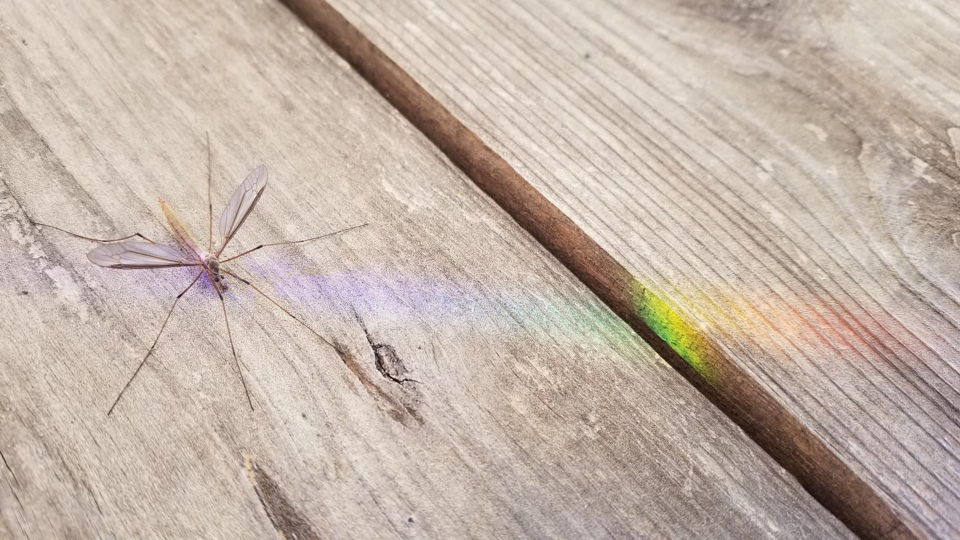 cranefly.jpg
