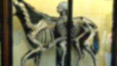 Museum skeleton.jpg