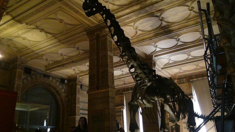 Museum animal.jpg