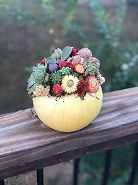 pumpkin succulent dark side 2.jpg
