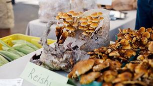 medicinal mushrooms.jpg