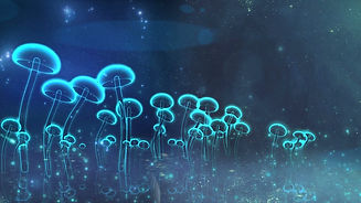 transparent-vitreous-mushroom-waggle-in-