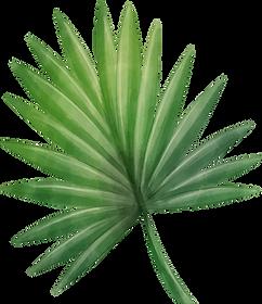 leaf 01.png