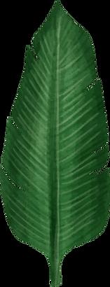 leaf 04.png