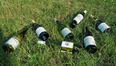 Białe wina na lato vol. 1. Carrefour.