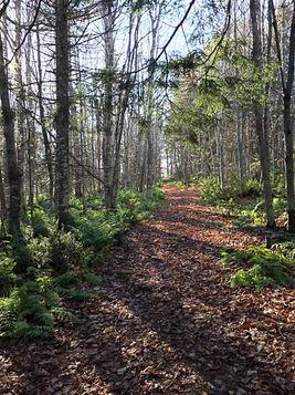 Forest grace