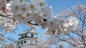 櫻到春來.日本東北賞櫻