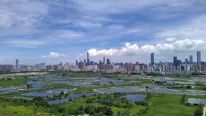 香港的祕密花園.落馬洲濕地