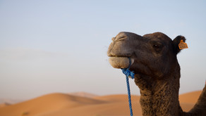 城藍舊事.摩洛哥攝旅