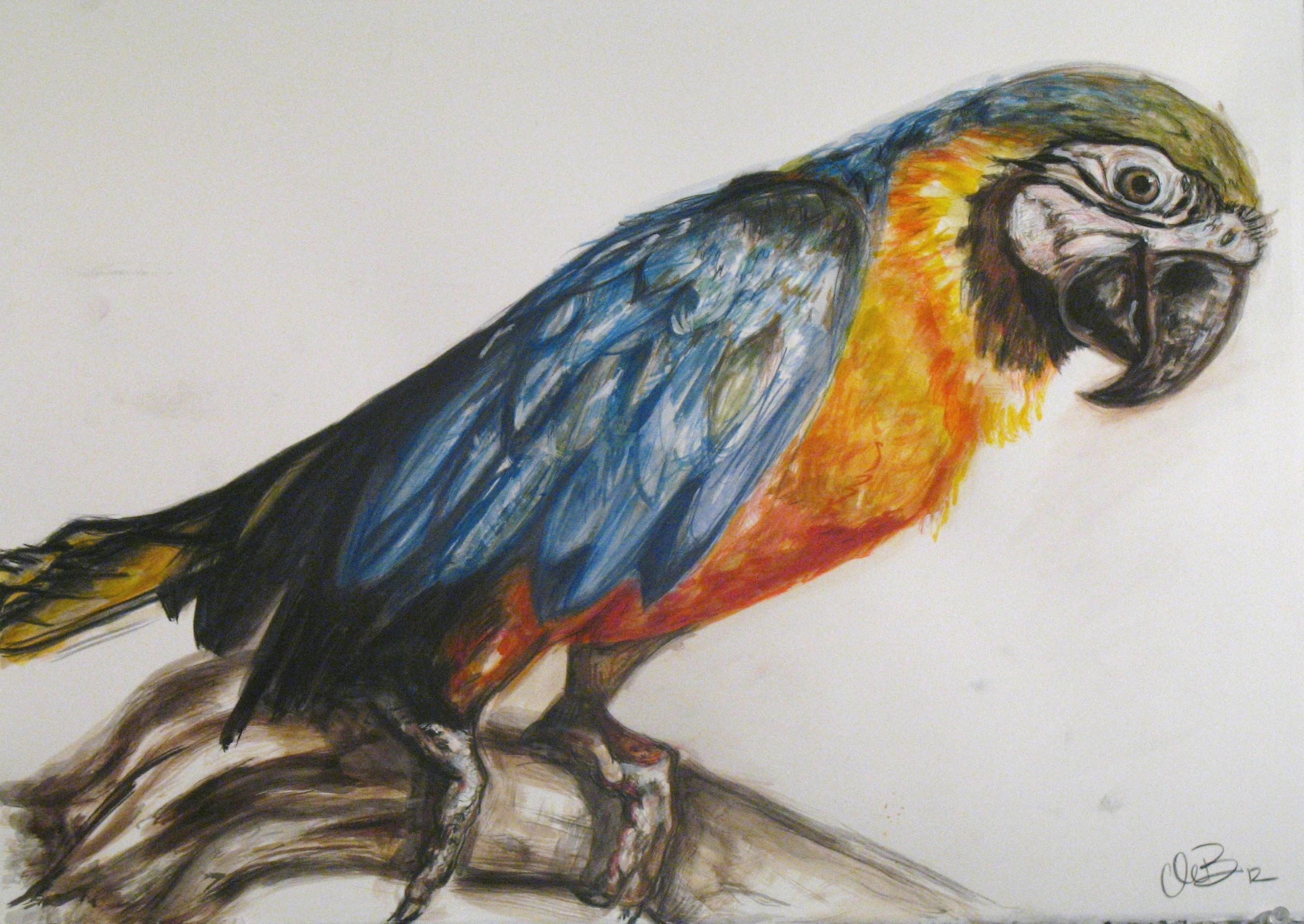 Watercolor of live bird model