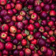 Apfel Zimt