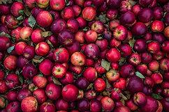 """Jeux culinaire """" La Pomme"""" Mardi 20 Octobre à 10h30"""
