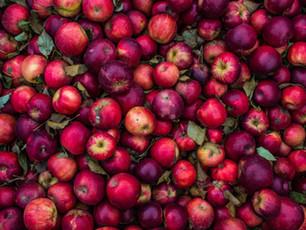 Les aliments qui boostent naturellement notre immunité