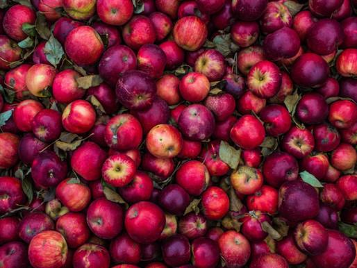 Making 'apple cider' vinegar