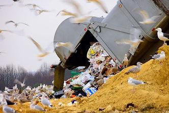 eastern-shore-maryland-dump-seagulls-800
