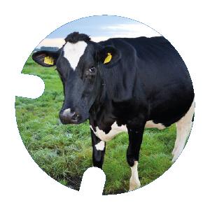Rond vache_Plan de travail 1.png