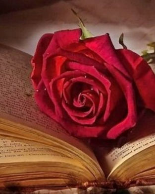 rose book 2_edited.jpg