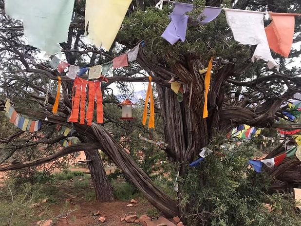Sedona stupa tree.jpg
