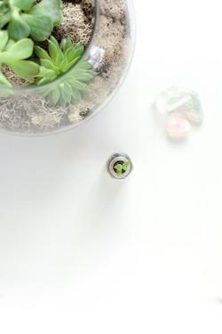 Succulent Layflat