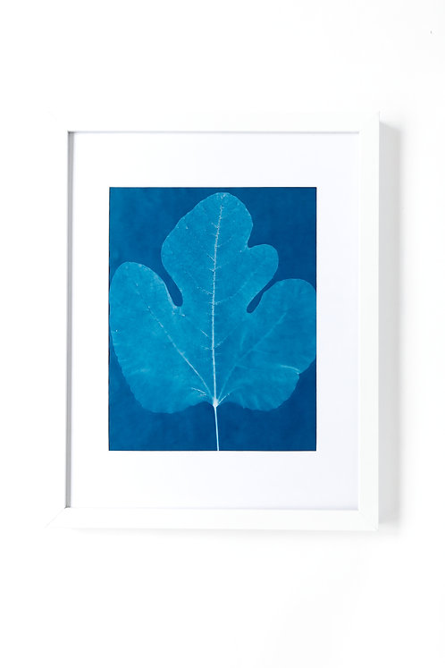 Fig Leaf, Hand Printed-limited Edition Cyanotype