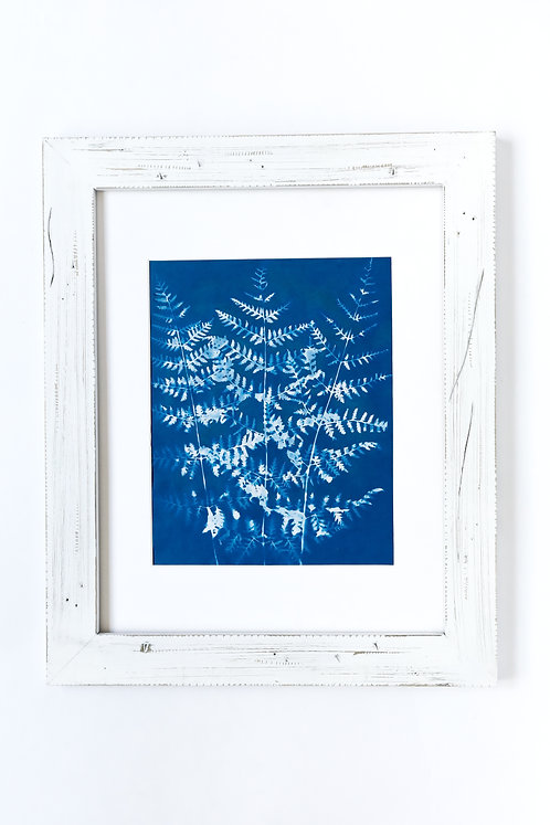 Fern, Hand Printed-limited Edition Cyanotype
