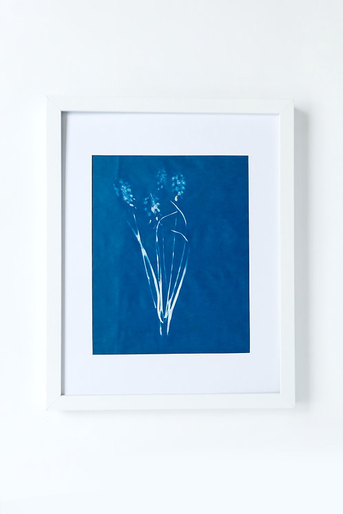 Flower, Hand Printed-limited Edition Cyanotype