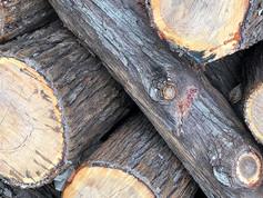 White Cypress Wood