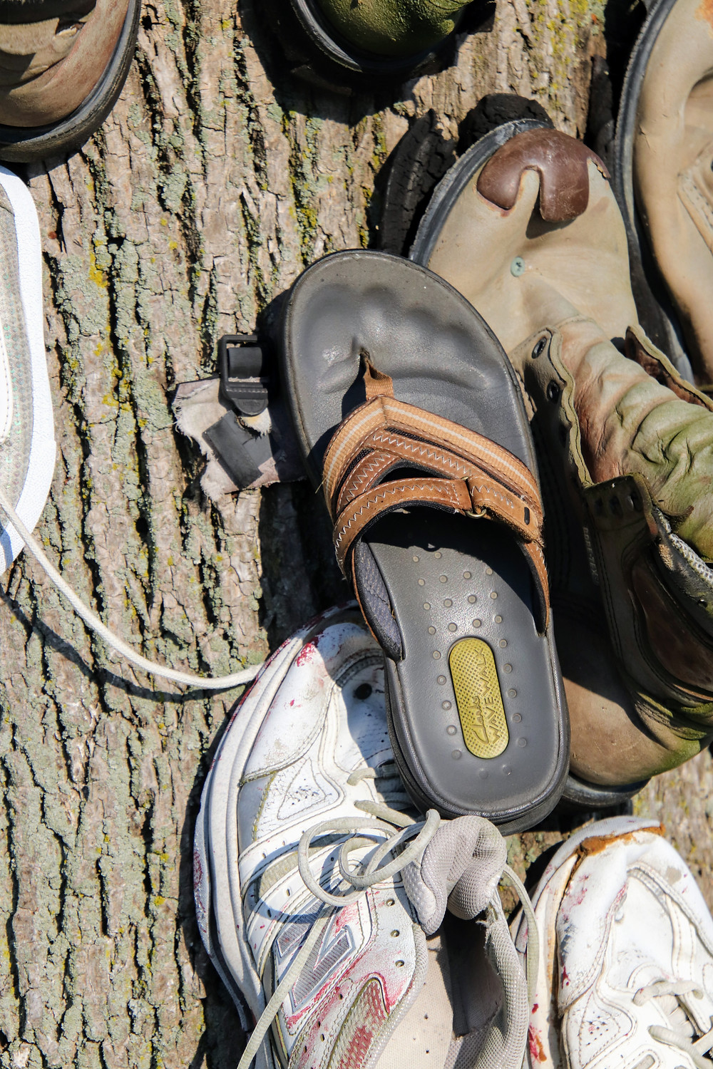 Some Soles are layed on the tree..like mine.