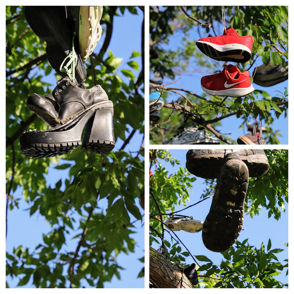 Some Soles hang from the trees.