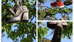 Sneaker Tree Lyndonville NY, July 2020