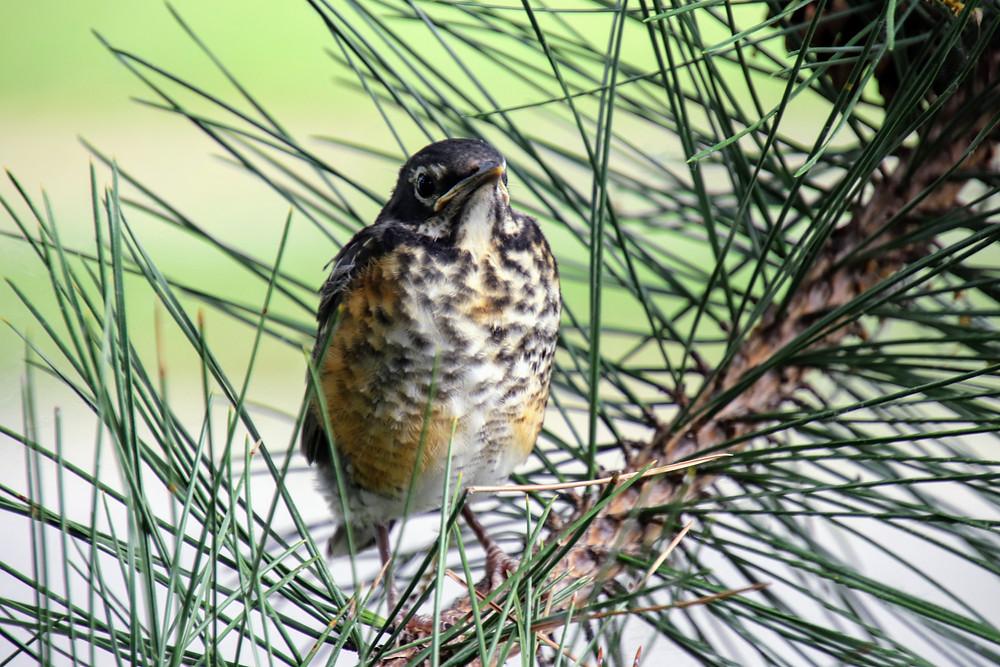 Bird Unafraid
