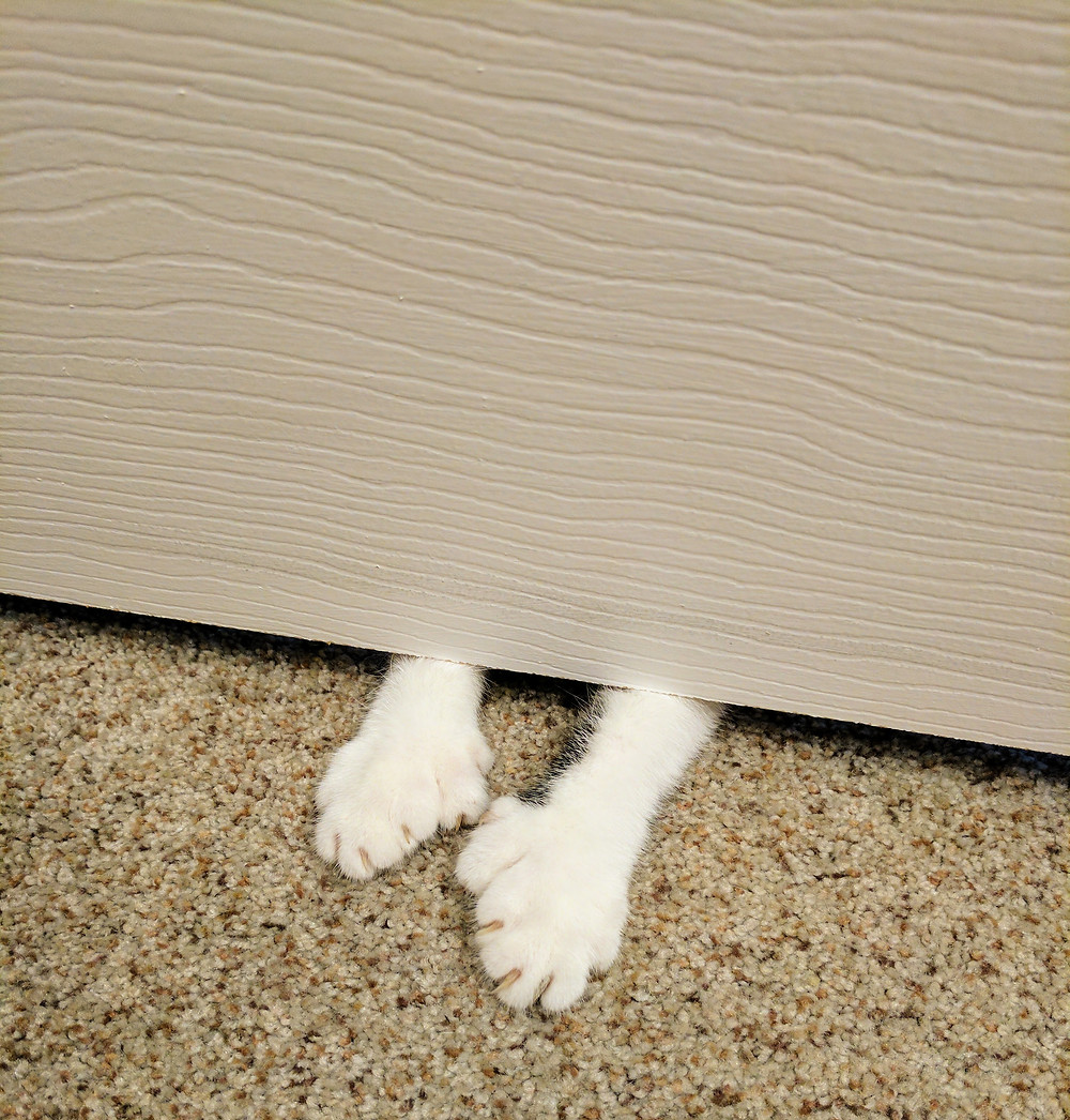 Fin thinks she is hiding.