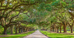 The Souls Of The Spanish Moss